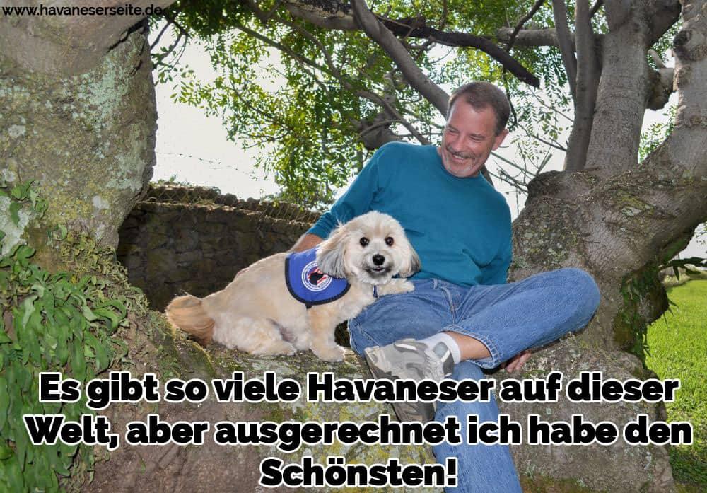 Ein Mann und seine Havaneser sitzen im Baum