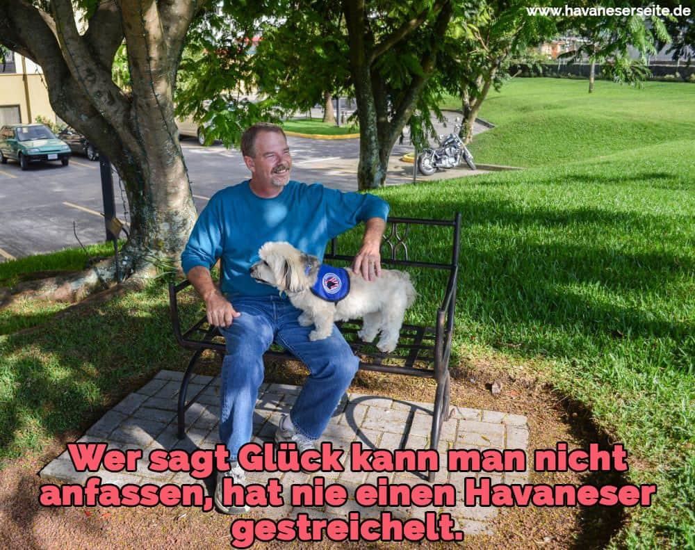Ein Havaneser auf einer Parkbank