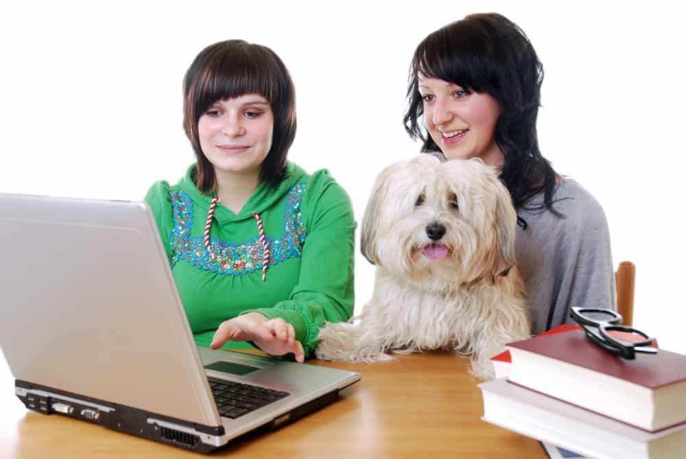 Junge Frauen mit Havaneser Hund vor einem Laptop Computer