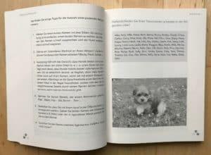 Havaneser Buch Tipps
