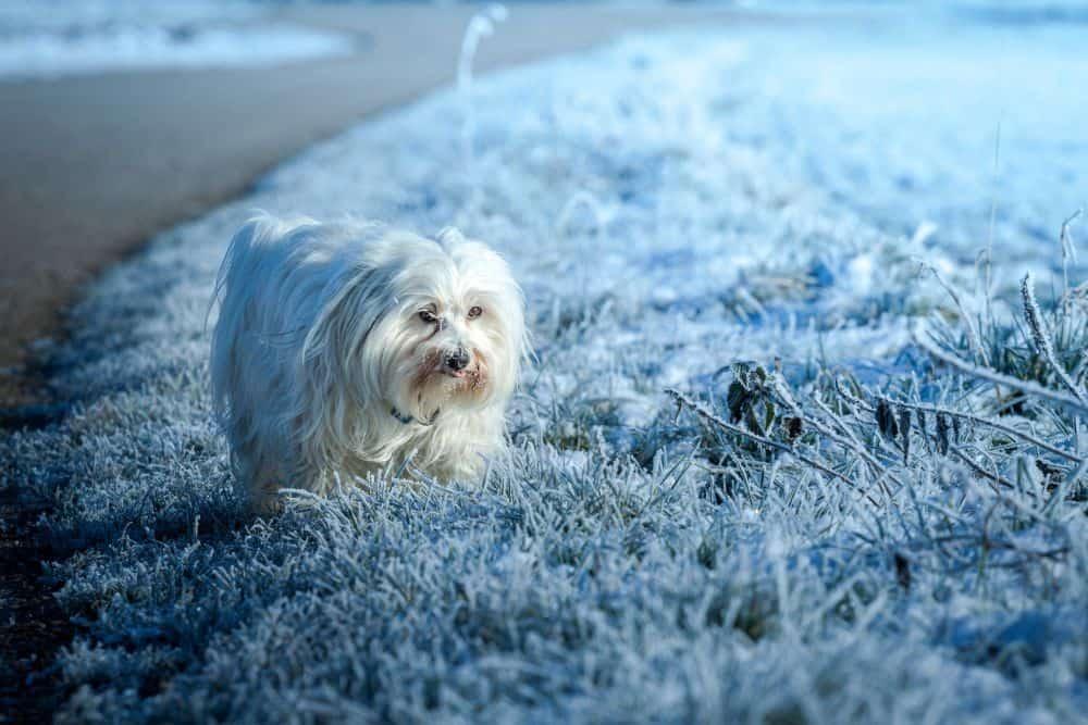 Pfotenpflege ist im Winter besonders wichtig.