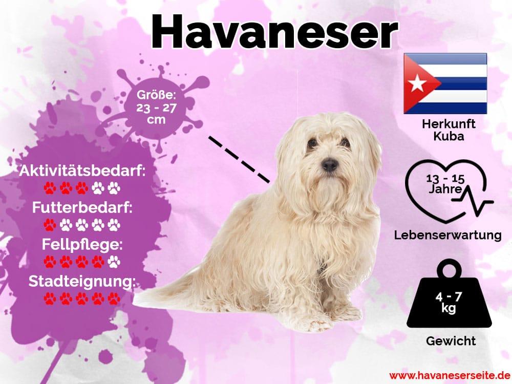 Infografik Havaneser